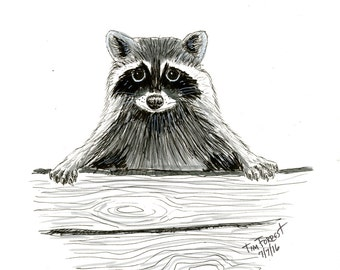 Raccoon peeking original drawing