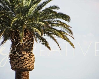 Desert Palm - Digital Download Photo