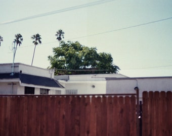 Los Angeles Photography, California, Palm Trees, Architecture, Urban, Analog Photography, 35mm, LA print, Palmiers, Vintage, LA, Scene