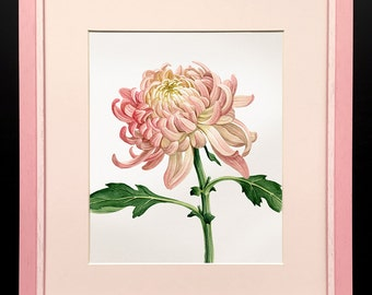Watercolor pink chrysanthemum painting