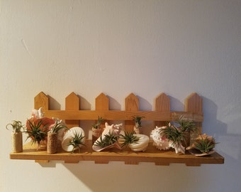 Airplant lot