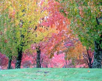 "Landscape Photography, Nature Print, Home Decor, Fall Leaves, Autumn Landscape, Wall Art, Fall Colors, ""Fall Mosaic"""