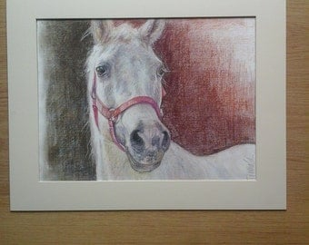 portrait of grey  horse