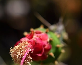 I5 - Pink Cactus Flower