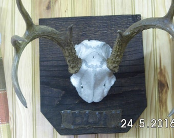 Antler Mounting Personalized, stained Antlers, Reclaimed wood used for all mounting, Oak, Maple, Walnut