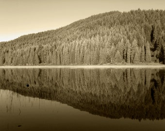 Sepia - Landscape Photography - Reflection Forest
