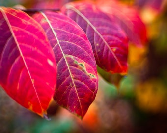 Nature photography - fall leaves