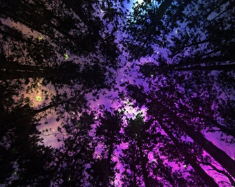 Pretty Lights Forest Escape Starry Night Tapestry