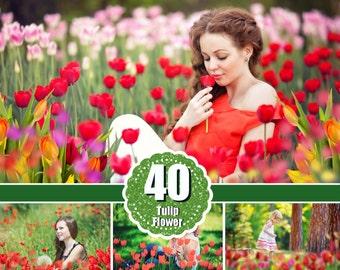 40 Tulip flower Photo Overlays, Photoshop Overlays, Photoshop overlay, Foreground Elements, digital overlays, png file
