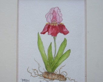 "Original Watercolour ""Lily purple"" framed"