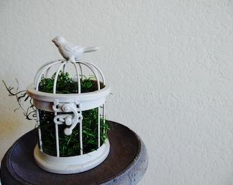 Little Bird Terrarium (white)