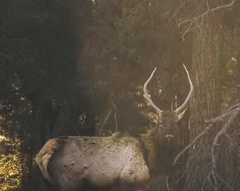 "Nature/Animal Photo - ""Eye of the Elk"""