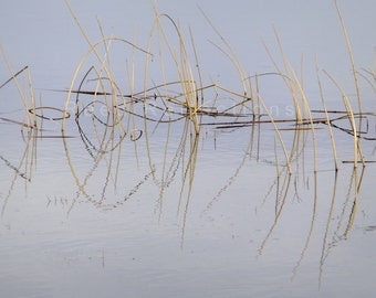 Reed Reflections #14