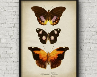 Butterfly print, Butterfly poster, butterflies wall decor, scientific butterflies chart, vintage butterfly