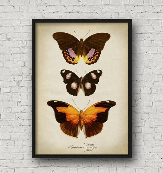 Papillon Impression Affiche De Papillon D Coration Murale
