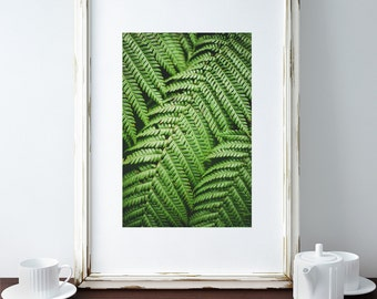 Beautiful Fern Leaves Wall Decor Photography Digital Print Art