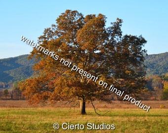 Tree in Cades Cove, TN - digital download