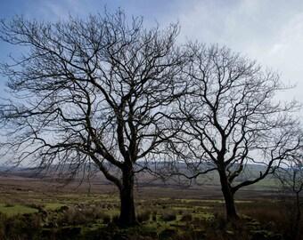 Trees at Slemish