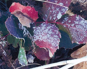 An Early Frost. A Colorado High Country Autumn