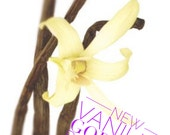 Vanilla Goddess Body Serum. Perfume Body Oil. 4 oz. Refill. Free Shipping. Limited Edition