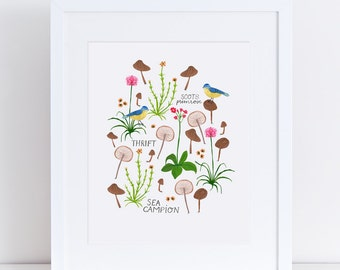 Scottish Wildflowers and mushrooms – A4 Fine Art Print - Blue tit, flowers & funghi