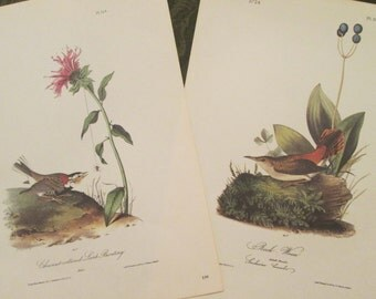 Two Vintage Bird Illustrations - Audubon Book Plates 1971