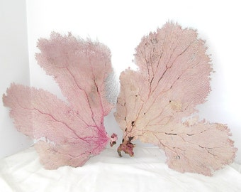 Reserved for Lucy Only, Set of 4 Sea Fans, Natural Bahama Sea Fans, Sea Fans for Fairy Wings, Large Seafans