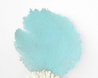 Sea Fan Coral, Aqua Turquoise, Beach Decor For Framing, Bahama Seafan, Sea Fan to Frame,Coastal Beach Nautical Decor