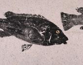Original Salt Water Black Fish or Tautog Fish Rubbing (GYOTAKU) Fishing Art on Hand Made Paper 22 X 29 inches