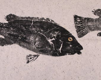 Original Salt Water Black Fish or Tautog Fish Rubbing (GYOTAKU) Fishing Art on Hand Made Paper 22 X 29 inches
