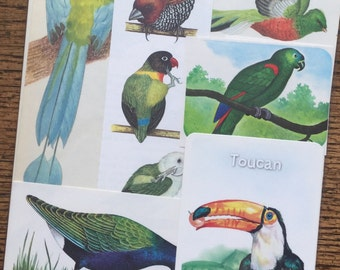 Tropical Birds of the World Vintage Nature Collage, Scrapbook and Planner Kit Number 2112