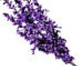 Gretchen Essential Oil Blend with Cedar Rose Lavender Sandalwood Jasmine Patchouli Vetiver