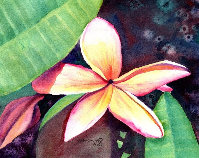 Plumeria Paintings,  Original Watercolors, Tropical Flower Paintings, Frangipani Art, Kauai Fine Art, Hawaiian Original Wall Decor, Hawaii