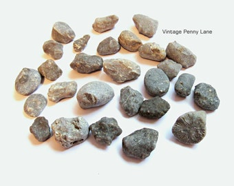 Fossilized Coral, Horn Coral Fossil Beach Rocks, Stones, Lake Ontario, Lot 2