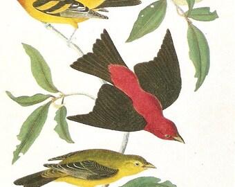 Vintage Audubon Birds Postcard - Louisana and  Scarlet Tanager - Artist Signed vintage postcard, SharonFosterVintage