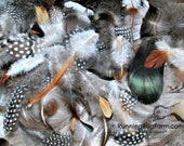 Mixed Feathers Natural Guinea Feathers Turkey Feathers Chicken Feather Duck Feather Assortment Real Loose Cruelty Free Feathers 30 1.5-4.5""