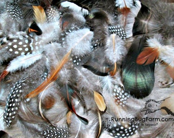 "Mixed Feathers Natural Guinea Feathers Turkey Feathers Chicken Feather Duck Feather Assortment Real Loose Cruelty Free 25 @ 1.5"" - 4.5"" / 47"