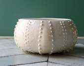 white sea urchin bowl, porcelain