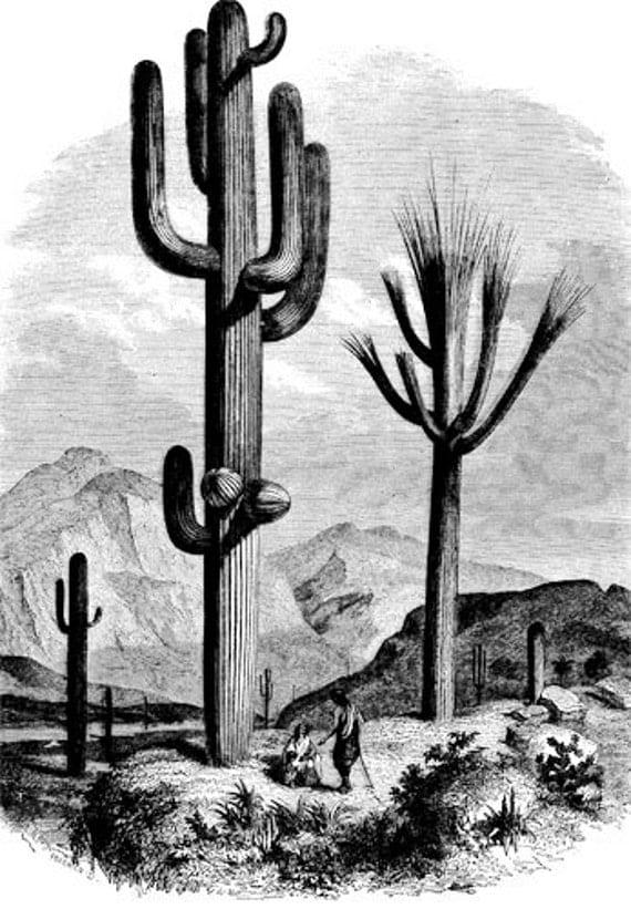 cactus desert landscape digital Download art graphics clip art png clipart images black and white printables plants nature printable