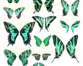 Digital Teal Green Butterfly Wings , insects, vintage images, digital butterflies, Collage Sheet