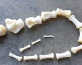 Small Horse Tail Bones- Caudal Vertebre- Real Bone-  Lot No. 160625-B