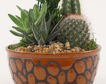 """Small Cactus Garden - 6"""" Earth tone colored ceramic container - Perfect Table Setting, Centerpiece, Gift"""
