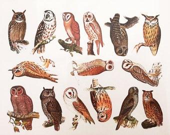 Antique Owl Prints - Glass Fusing Decal, Ceramic Decal, Enamel Decal