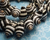 Pyrene shell beads 13mm - 10pc