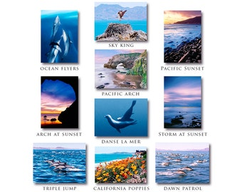 Note Cards, Greeting Cards, seascape note cards, dolphin note cards, note card discount, seascape photos, dolphin photos, note card set