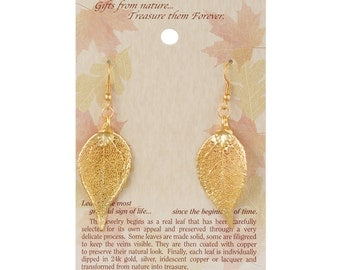 Real Evergreen Leaf Dipped In 24k Gold French Hook Earrings - Real Dipped Leaves - On Card