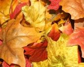 25 Fall Leaves  - Artificial Leaves, Silk Leaves