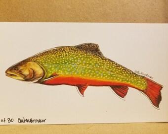 """MINI 4x7"""" Brook trout Print. limited edition"""