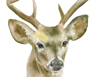 Deer Buck Watercolor Painting 5 x 7 Giclee Print Reproduction 8-Point Buck Nursery Art