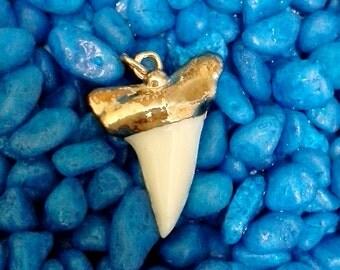 Genuine mako shark tooth gold trimmed pendant